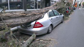 Teilkasko - Baum fällt auf Auto